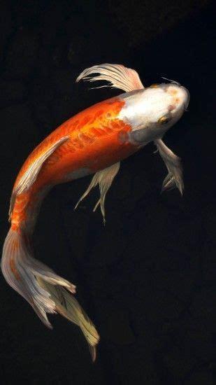 koi fish wallpapers wallpapertag