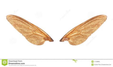Design Floor Plans Free insect wings of fly royalty free stock photo image 11728895