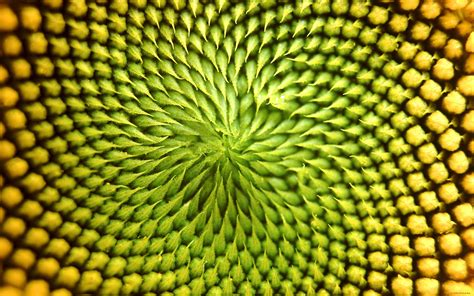 Wallpaper Patterns by Textures Fibonacci Wallpapers