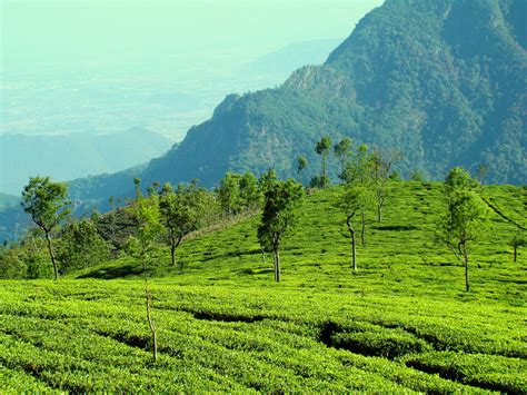 Ooty Tamilnadu Wallpapers Tourist Places In India Wallpapers And Images Hd Pictures Images Of