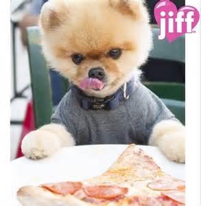 Photos jiffpom cutest celebrity dog on instagram