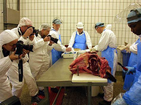 imagenes locas en español informe semanal crisis de las vacas locas rtve es