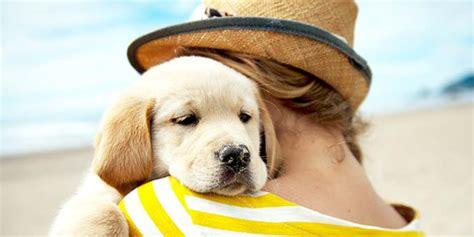 hill s healthy advantage puppy healthy advantage food hill s pet