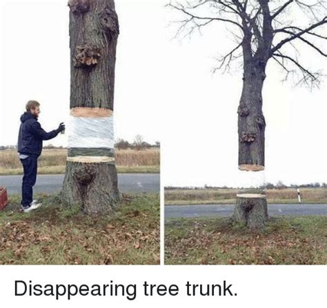Tree Trunks Meme - disappearing tree trunk meme on sizzle