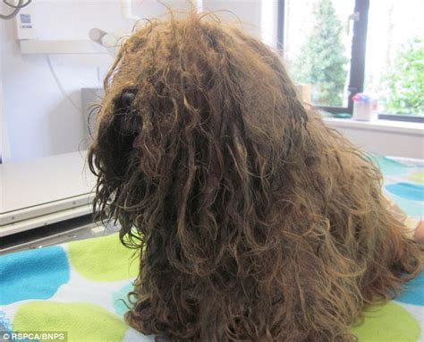 rspca shih tzu vet kerstin vockert could be struck for animal cruelty daily mail