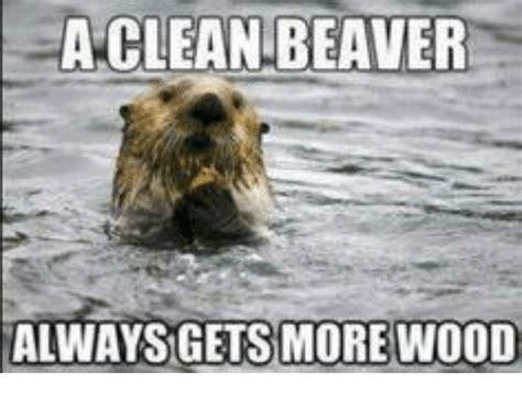 Beaver Meme - a clean beaver always gets more wood meme on me me