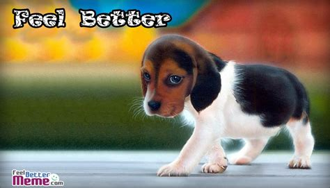 feel better puppy feel better www pixshark images galleries with a bite