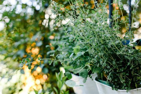 pflanzen für balkon lichterkette balkon idee