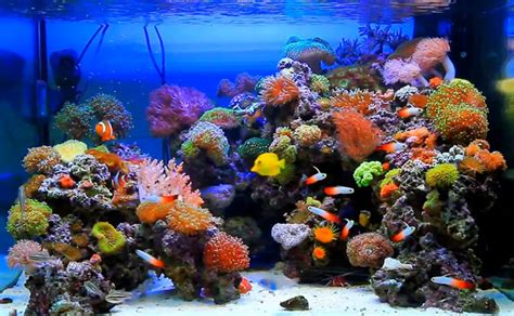 reef aquascape reef aquascaping inspiration advanced aquarist
