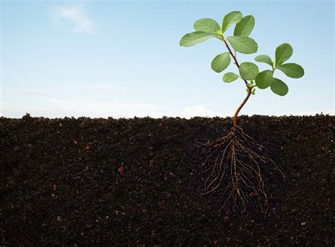 Planter Soil by How To Prepare Soil For Planting Why Preparation Of Soil Is Important For Your Plants