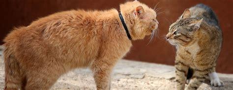 come allontanare i gatti dal giardino per allontanare i gatti dal giardino autsca