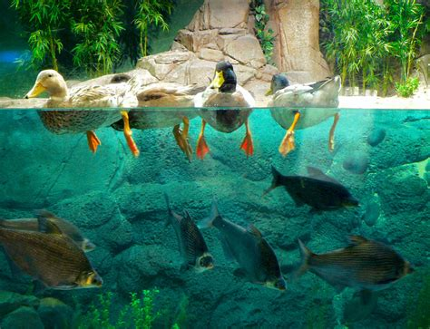 Lu Aquarium the 10 most interesting things to do and see in lujiazui