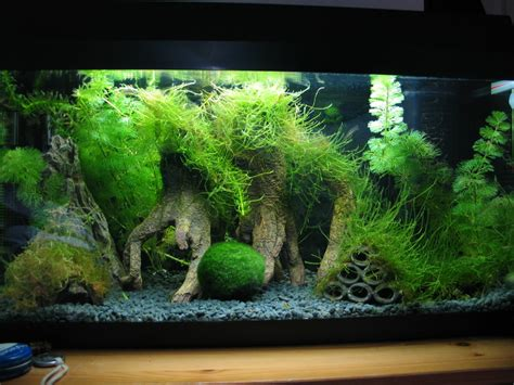 java moss aquascape 10 gallon fish tank aquascape idea with java moss trees