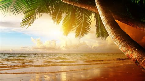 summer tropical scenery sunset sea ocean palm trees