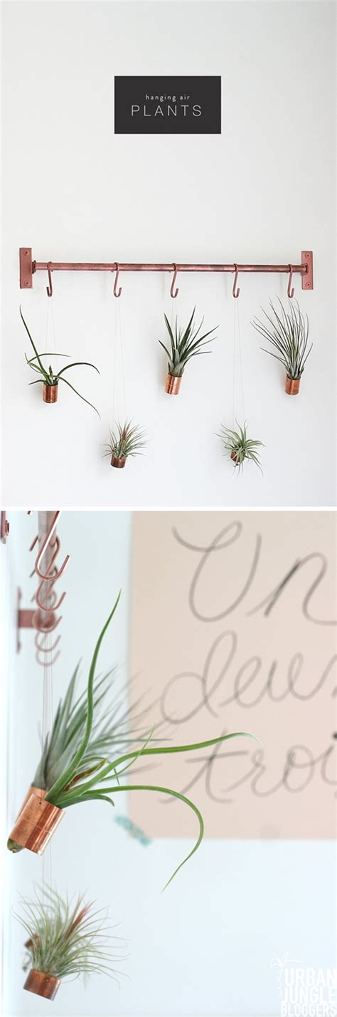 air plants bathroom bathroom decorating ideas on a budget diy ready