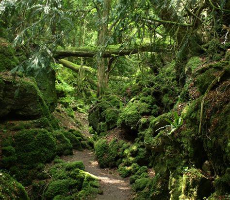 imagenes de bosques increibles este es el bosque quot de cuento quot que habr 237 a inspirado la