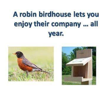robin house plans robin bird house plans luxury robin birdhouse plans new home plans design