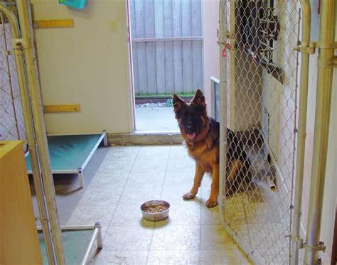 dog kennel in garage indoor dog kennel run german shepherd dog forums for