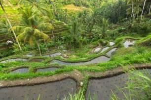 terrazzi verdi terrazzi verdi giardini e progetto verde dal progetto