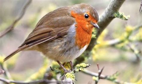 how to your bird how to help your garden birds this winter garden style express co uk
