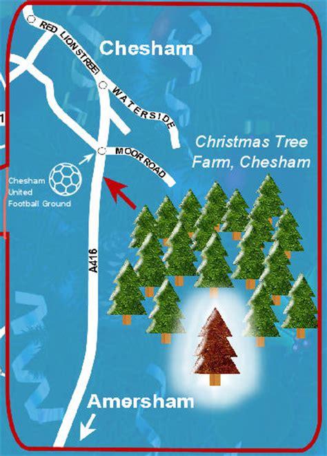 christmas trees chesham tree farm chesham trees uk tree