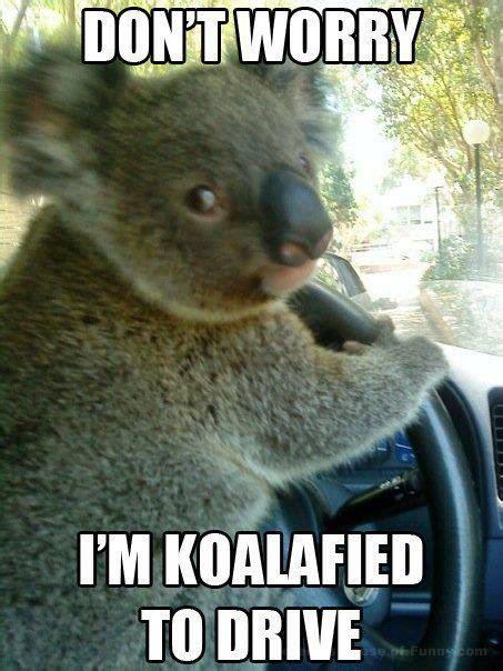 Meme Australia - best 10 australia meme ideas on pinterest meanwhile in