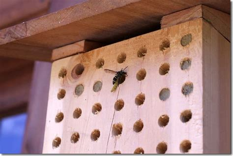 let s invite leaf cutter bees into our gardens