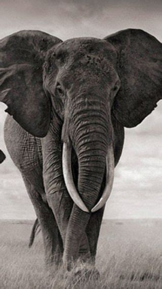 wallpaper iphone 6 elephant iphone ios 7 wallpaper tumblr for ipad impressionnant