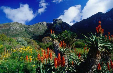 Kirstenbosch Botanical Gardens Kirstenbosch Botanical Gardens Lonely Planet