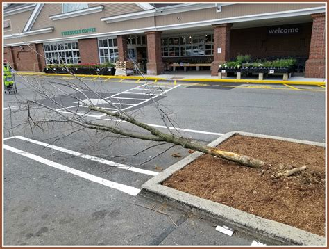 stop and shop trees westport stop shop 06880