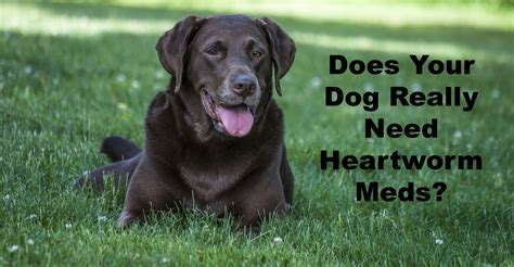 heartworm meds for dogs heartworm medication part 1 truths omissions and profits dogs naturally magazine