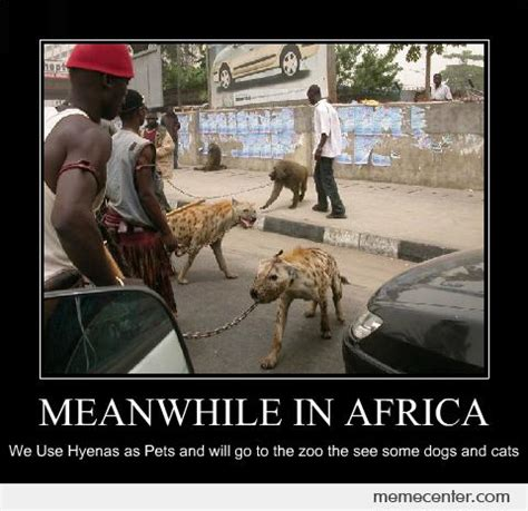 Meme Africa - hyena memes best collection of funny hyena pictures