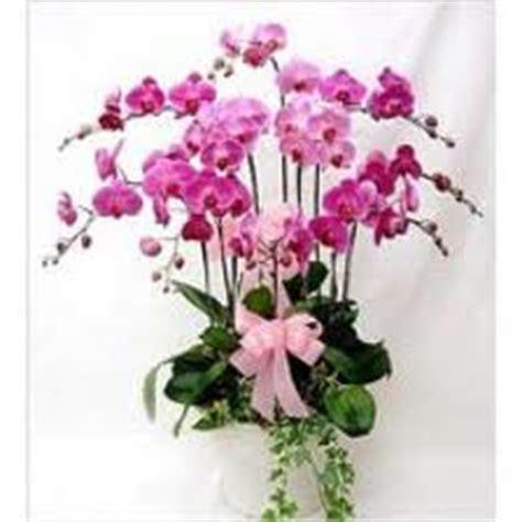 Bibit Anggrek Murah Bandung toko karangan bunga dan toko bunga murah bandung selatan