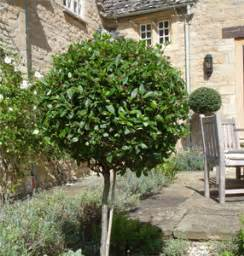 rates box tree cottage burford b b bed breakfast in