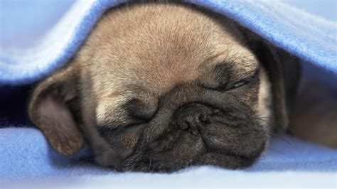 Funny Sleeping Baby Monkey Wallpaper   Dog Breeds Picture