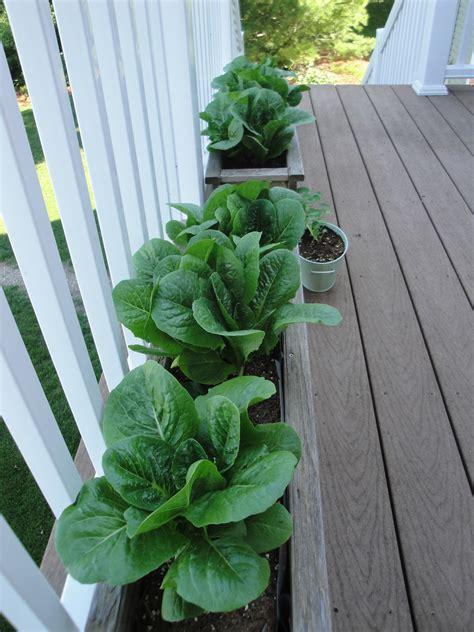 Deck Vegetable Garden Is Looking Good My Northern Garden Deck Vegetable Garden