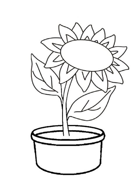 sketsa bunga matahari  pot koleksi gambar mewarnai