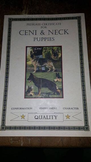 puppies for sale in springfield il german shepherd puppies for sale springfield il 198310