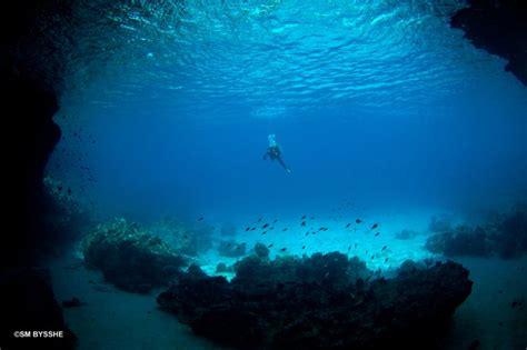 the blue room curacao go west diving en snorkel trips