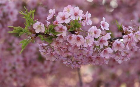descargar fondos de pantalla flores de muchos colores hd descargar fondos de pantalla flor de la primavera las
