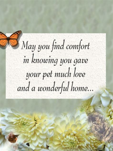 words of comfort for loss of pet pet loss sympathy cards pet sympathy cards