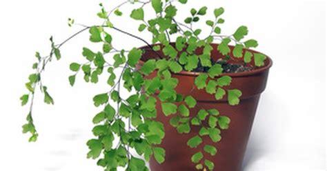 House Humidity Levels Uk House Humidity Levels For Plants Ehow Uk