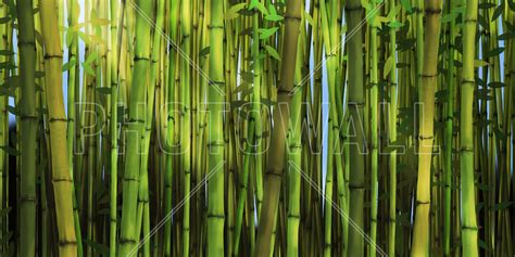Bamboo Forest Wallpaper Room - bamboo forest wall mural photo wallpaper photowall