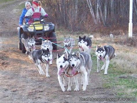 how are sled dogs trained valley snow dogz white mountain sled tours thornton new hshire sledding