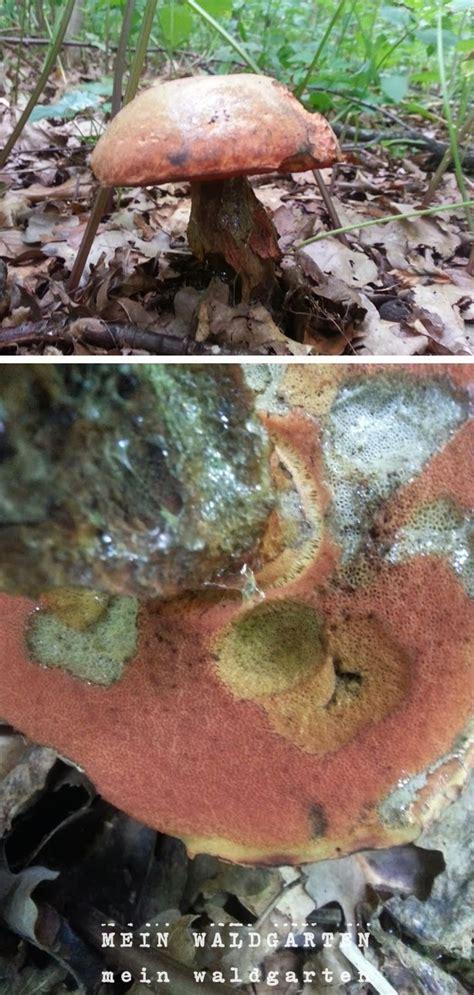 Typische Pilze Im Garten by Mein Waldgarten Pilze Im Garten