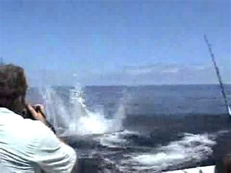 fishing show boat accident marlin jumps into the boat fishing accident youtube