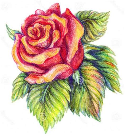 flowers in colored pencil beautiful flowers drawing with color images