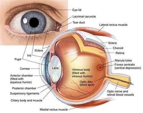 cornea raleigh opthalmology