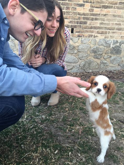 dogs for sale in utah utah cavalier king charles spaniel rescue puppies for sale