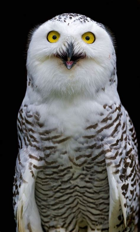 Happy Owl Top 936 best images about happy animals smiling laughing on smiling animals